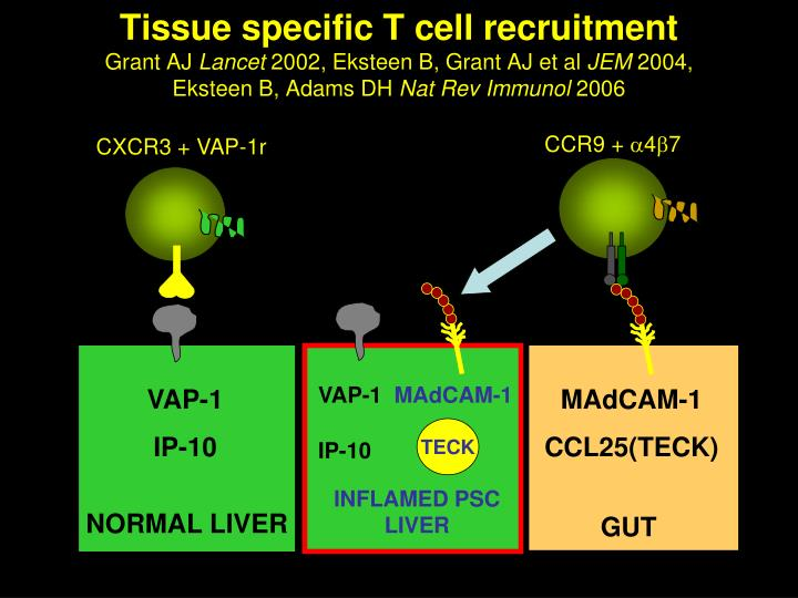 Tissue specific T cell recruitment