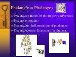 phalang o phalanges