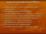 causes for low productivity of wheat