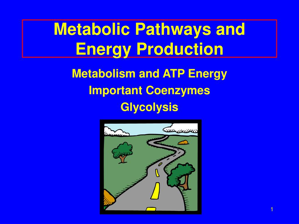 metabolic pathways and energy production l.