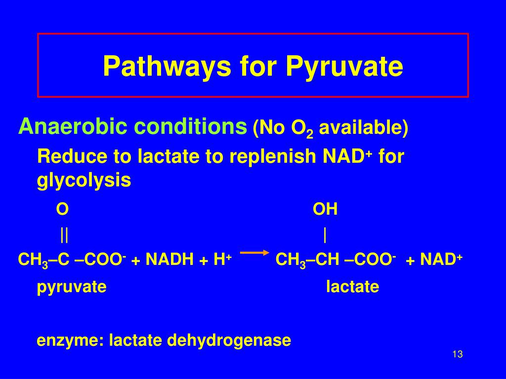 Pathways for Pyruvate