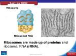 types of rna33