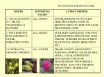 plantation horticulture