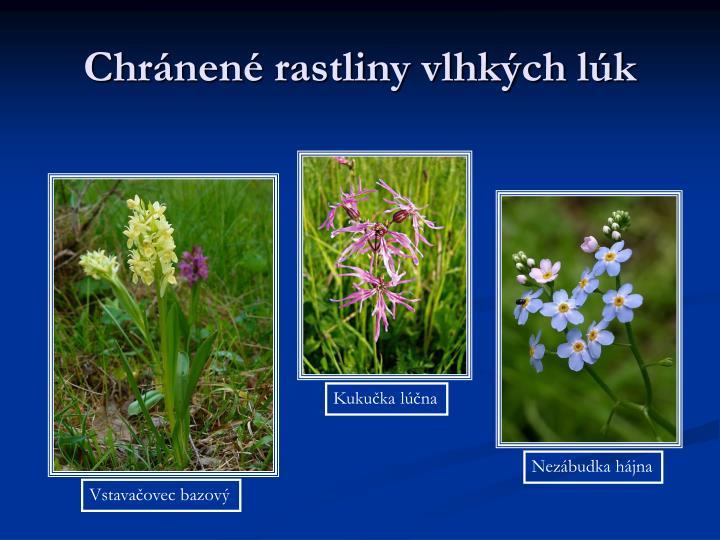 Chránené rastliny vlhkých lúk