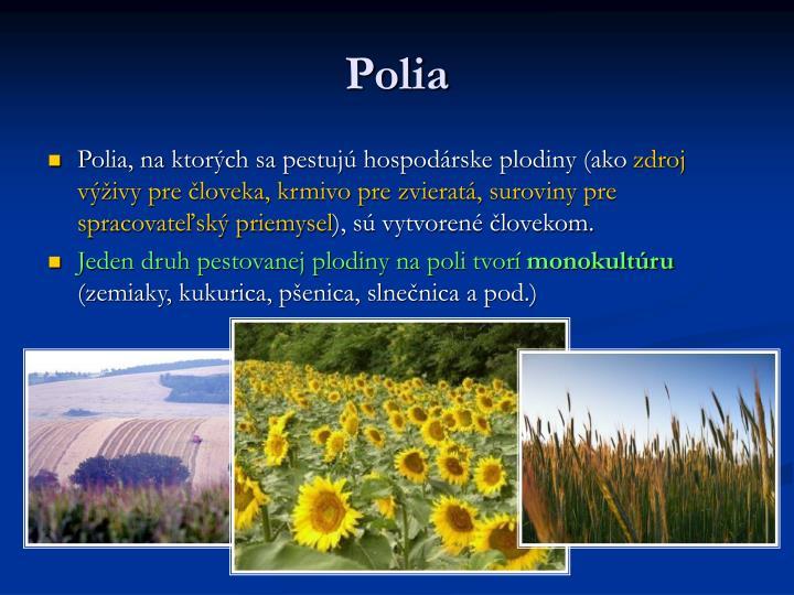Polia