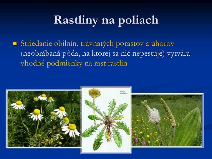 Rastliny na poliach