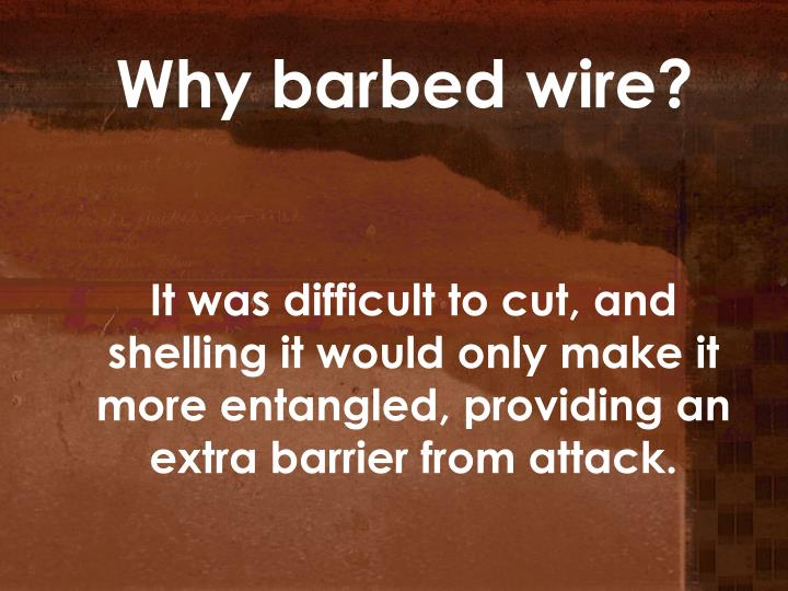 Why barbed wire?