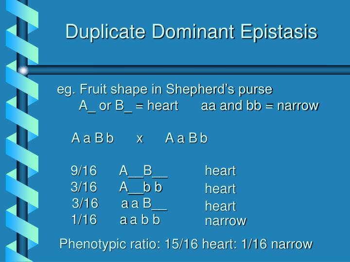Duplicate Dominant Epistasis