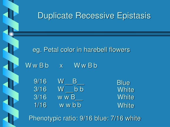 Duplicate Recessive Epistasis