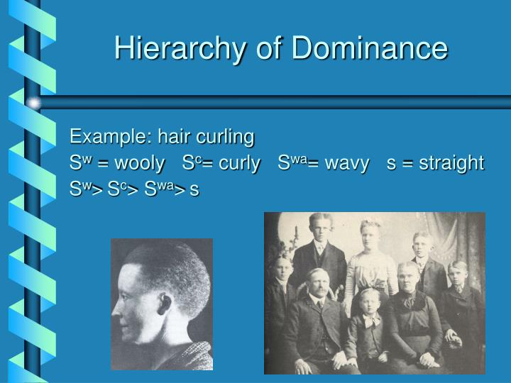 Hierarchy of Dominance