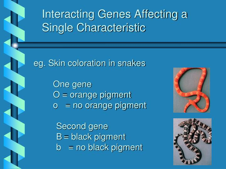 Interacting Genes Affecting a Single Characteristic