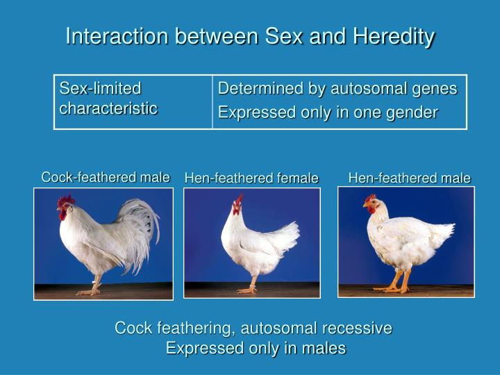 Interaction between Sex and Heredity