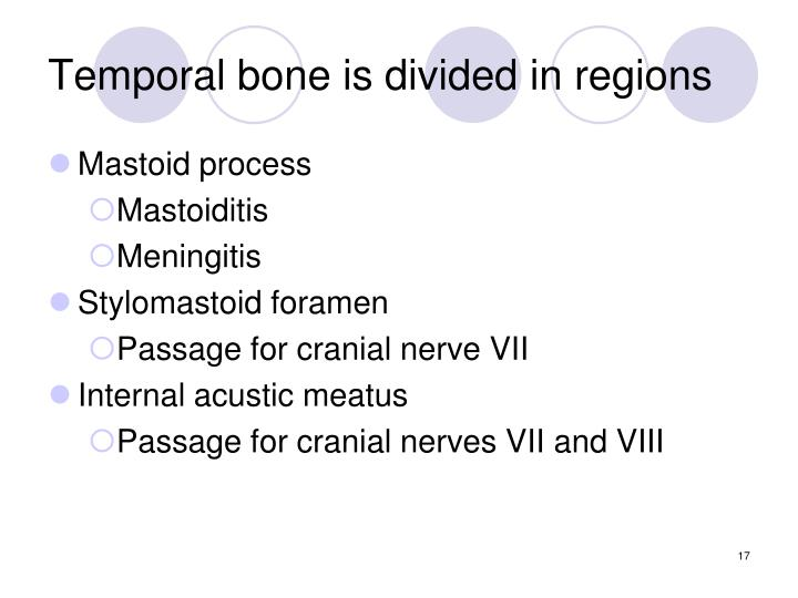 Temporal bone is divided in regions