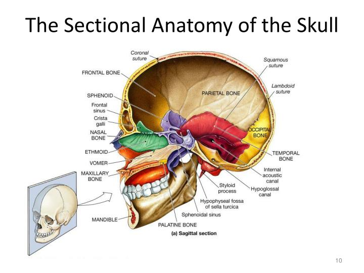 The Sectional Anatomy of the Skull