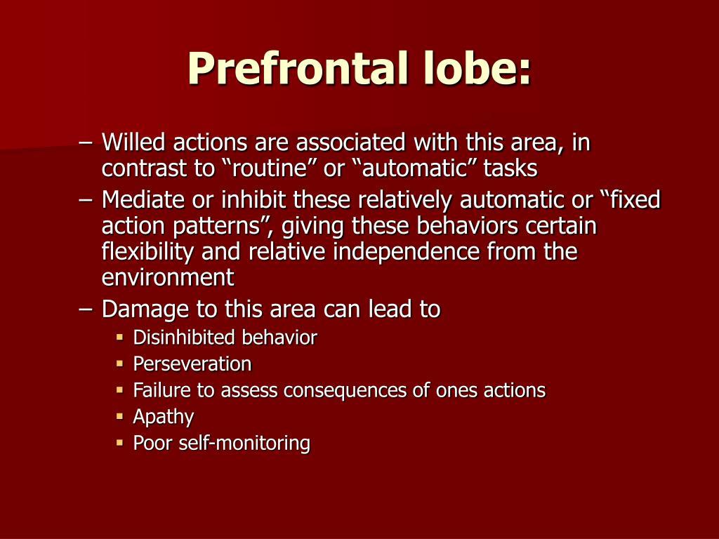 Prefrontal lobe: