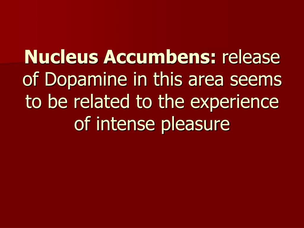 Nucleus Accumbens: