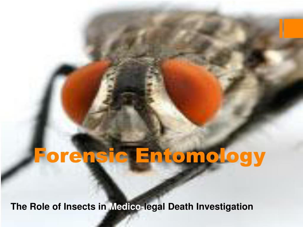 Ppt Forensic Entomology Powerpoint Presentation Free Download Id 1443387