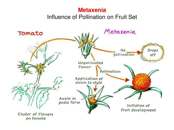 Metaxenia