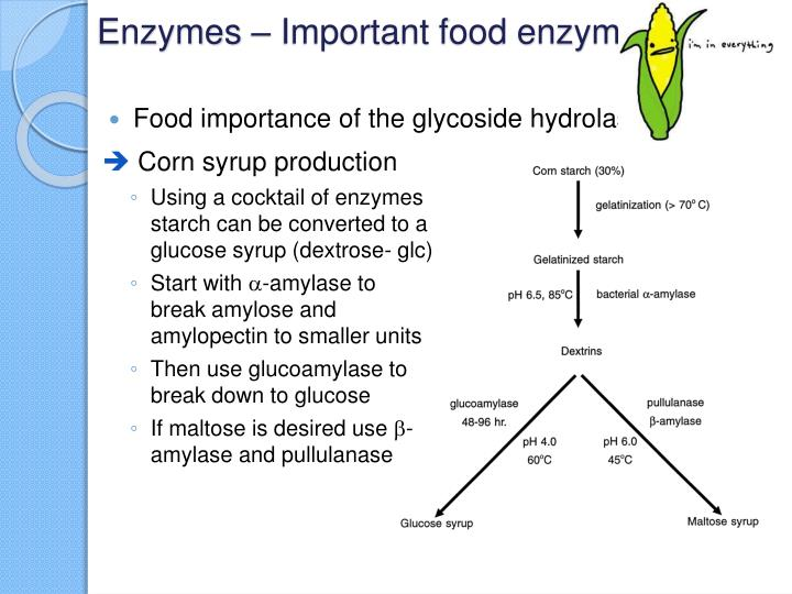 importance of enzymes