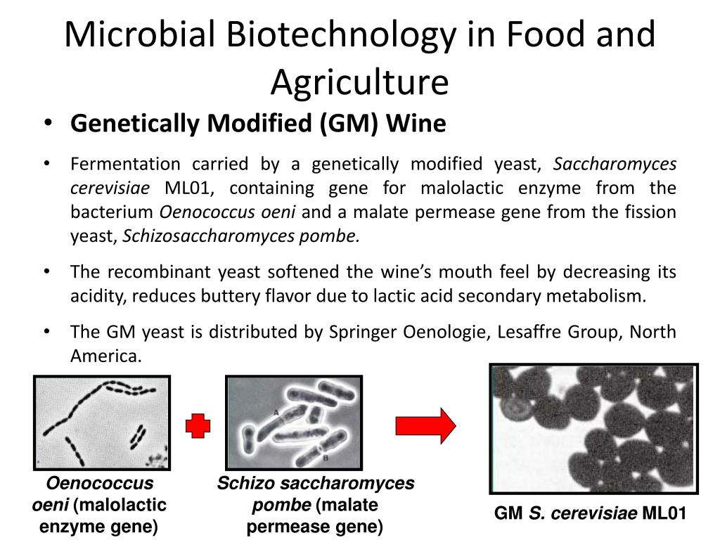 PPT - Microbial Biotechnology PowerPoint Presentation - ID:1444206