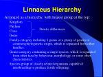 linnaeus hierarchy