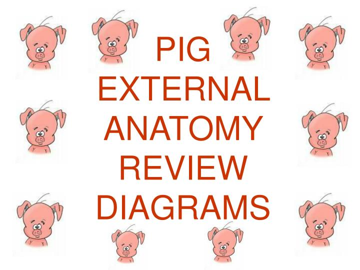 Ppt Pig External Anatomy Review Diagrams Powerpoint Presentation
