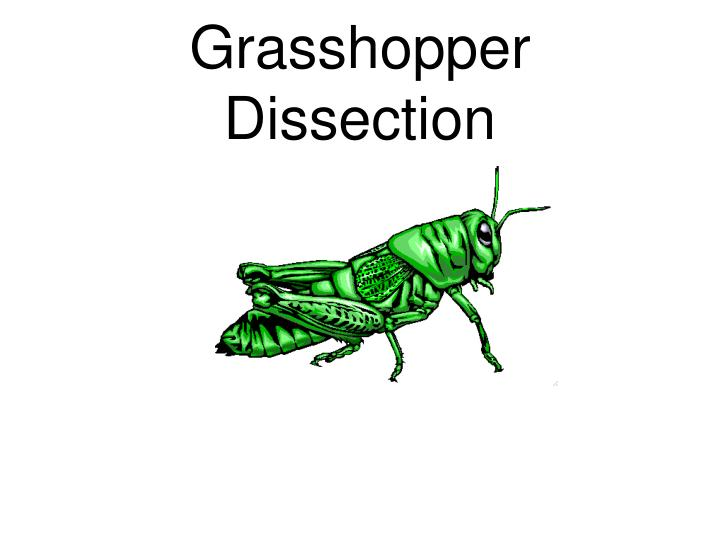 Ppt Grasshopper Dissection Powerpoint Presentation Id1444603