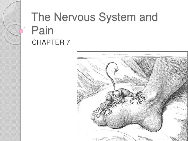 the nervous system and pain n.