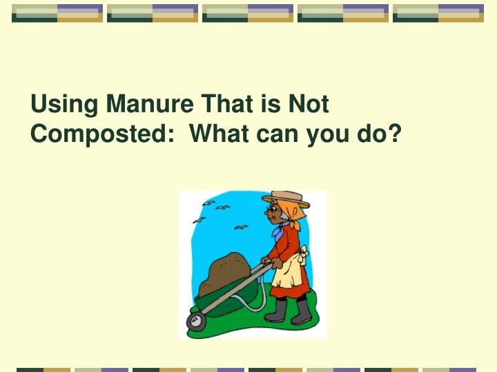 Using Manure That is Not Composted:  What can you do?