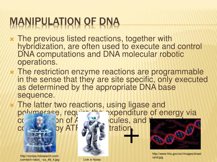 The previous listed reactions, together with hybridization, are often used to execute and control DNA computations and DNA molecular robotic operations.