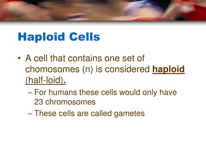Haploid Cells