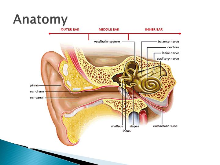 Ppt Common Disorders Of The External Middle Amp Inner Ear
