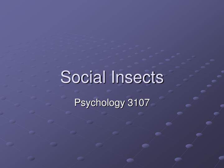 social insects n.