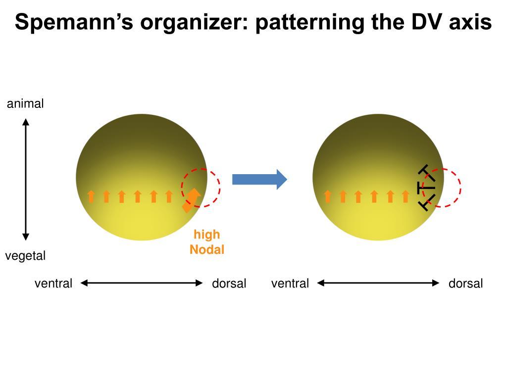 Plaquenil et surveillance ophtalmologique