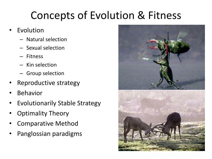 Concepts Of Evolution Natural Selection And Fitness