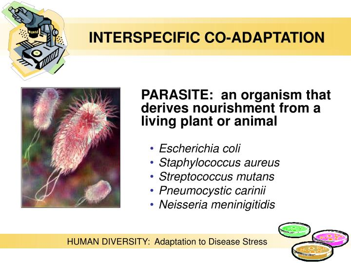 INTERSPECIFIC CO-ADAPTATION