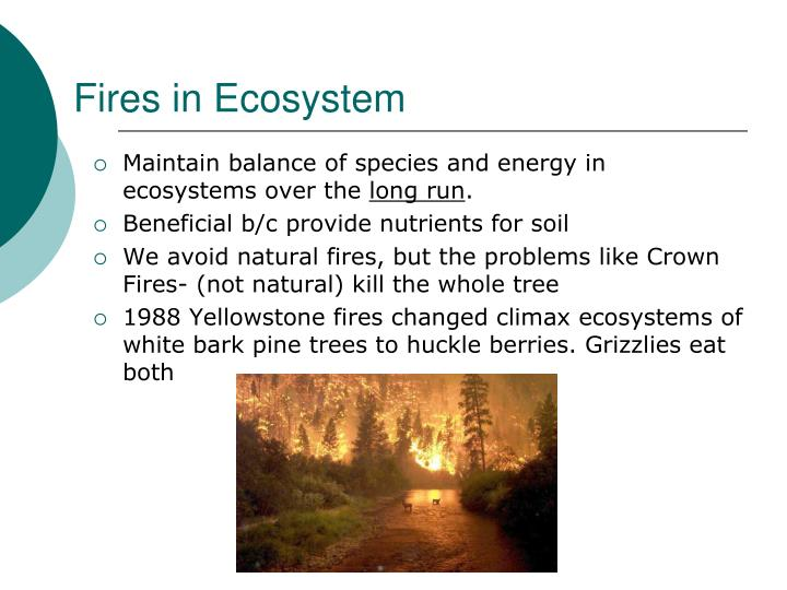 Fires in Ecosystem