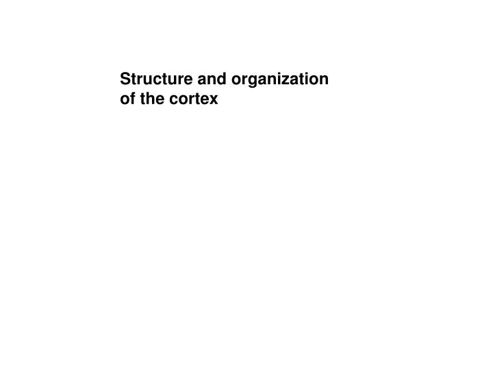 Structure and organization of the cortex
