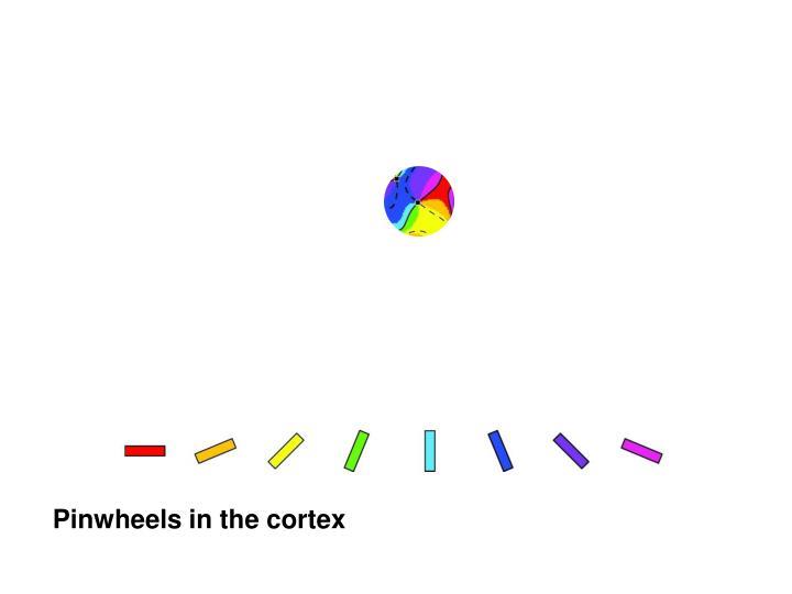 Pinwheels in the cortex