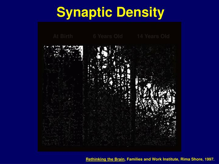 Synaptic Density