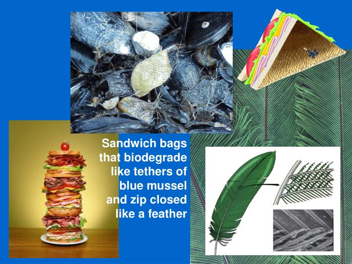 Sandwich bags that biodegrade like tethers of blue mussel and zip closed like a feather
