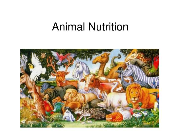 ppt animal nutrition powerpoint presentation id 1454567