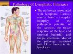 pathology of lymphatic filariasis