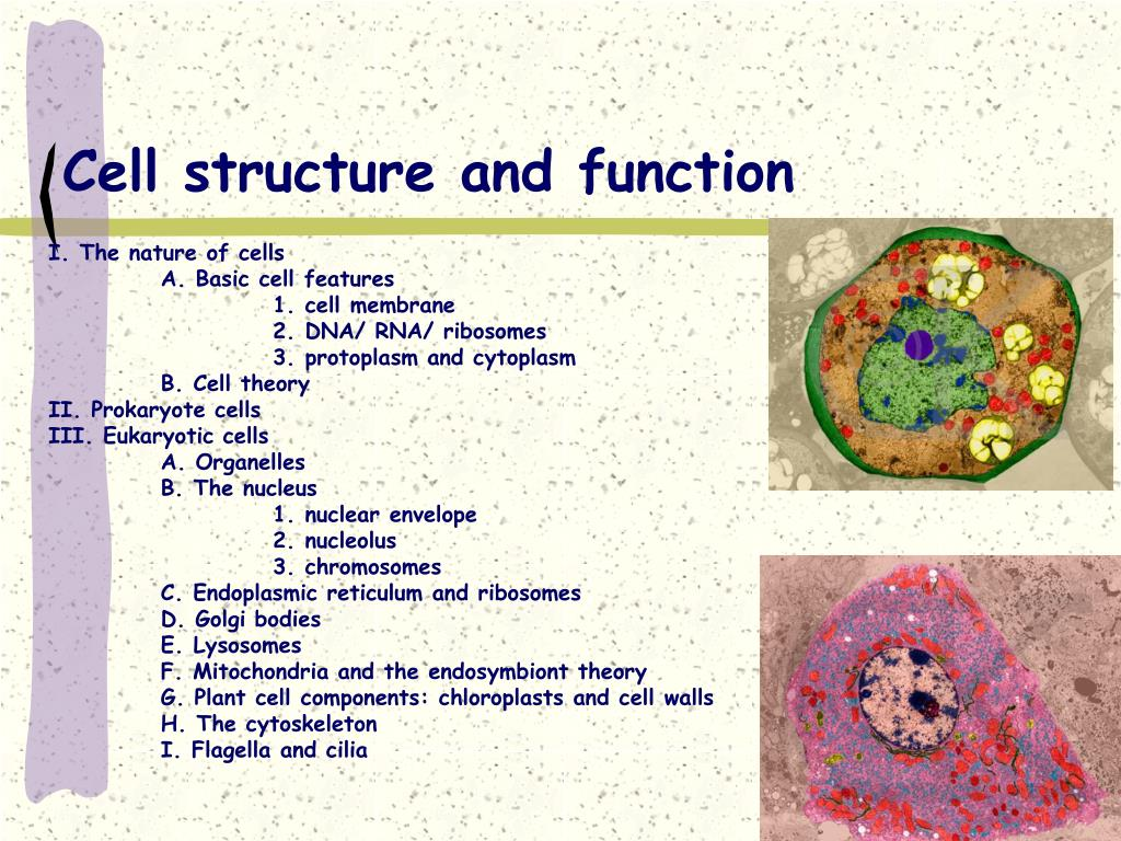 Ppt Cell Structure And Function Powerpoint Presentation
