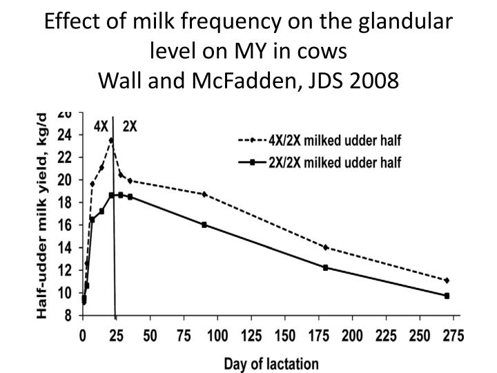 Effect of milk frequency on the glandular level on MY in cows