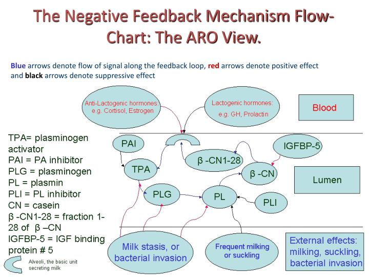 The Negative Feedback Mechanism Flow-Chart: The ARO View.