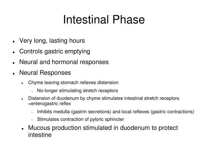 Intestinal Phase