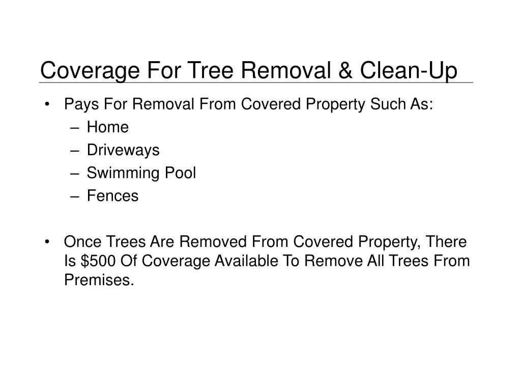 Coverage For Tree Removal & Clean-Up
