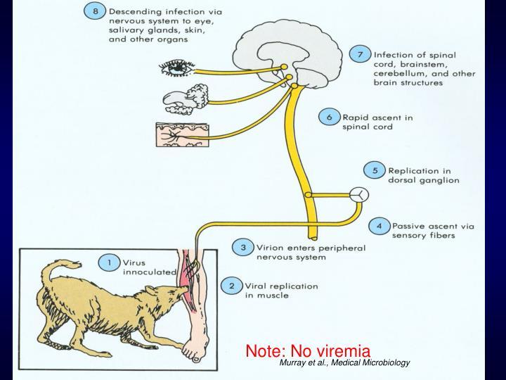 Note: No viremia