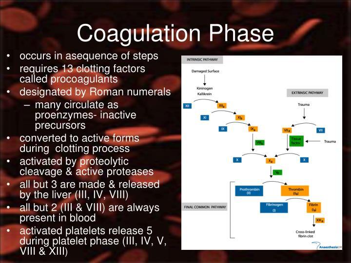 Coagulation Phase